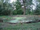 Förderung Natürliches<br>Erbe - Falkenhain Schloss-<br>teich nach Holzung